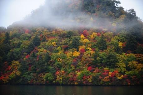 十和田湖楓葉