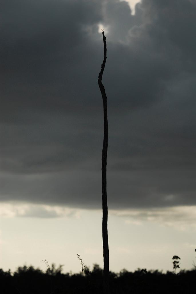 沼澤國家公園